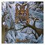 Album Stormblåst de Dimmu Borgir