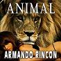 Album Animal de Armando Rincon
