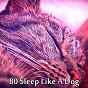 Album 80 sleep like a dog de Smart Baby Lullaby