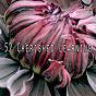 Album 52 cherished learning de Ocean Sounds Collection