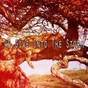 Album 40 give into the storm de Rain Sounds
