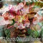 Album 73 sounds of natural wonder de Ambiente