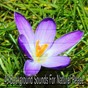 Album 49 background sounds for natural peace de Massage Therapy Music