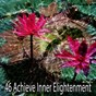 Album 46 achieve inner elightenment de Deep Sleep Meditation