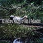 Album 80 a natural album for rest & relaxation de Sounds of Nature Relaxation