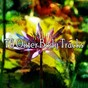 Album 76 outer body tracks de Massage Therapy Music