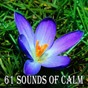 Album 61 Sounds of Calm de Classical Study Music