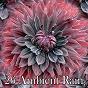 Album 26 Ambient Rain de Ambient Rain