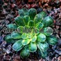 Album 45 inspiring sounds for soul soothing de Lullabies for Deep Meditation