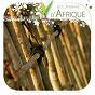 Album Les jardins D' afrique de Vincent Bruley