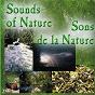 Album Sons de la nature, vol. 1 de Illustrations Sonores