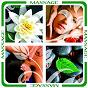 Compilation Massage avec André Garceau / Philippe Bestion, Karin Nobbs / Sylvain Poge / Vincent Baguerre, Aurélien Baguerre / Pierre Arrachart, Rudy Cohen, Mickael Hervé...