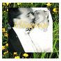 Album Tillägnan - kärlekssånger de Blandade Artister